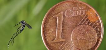 La lutte contre le moustique commence