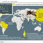 Le virus Zika transmis par le moustique tigre se propage