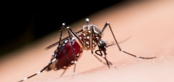 L'été indien du moustique