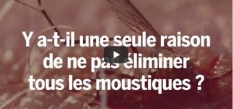 Tuer tous les moustiques, une bonne ou mauvaise idée ?