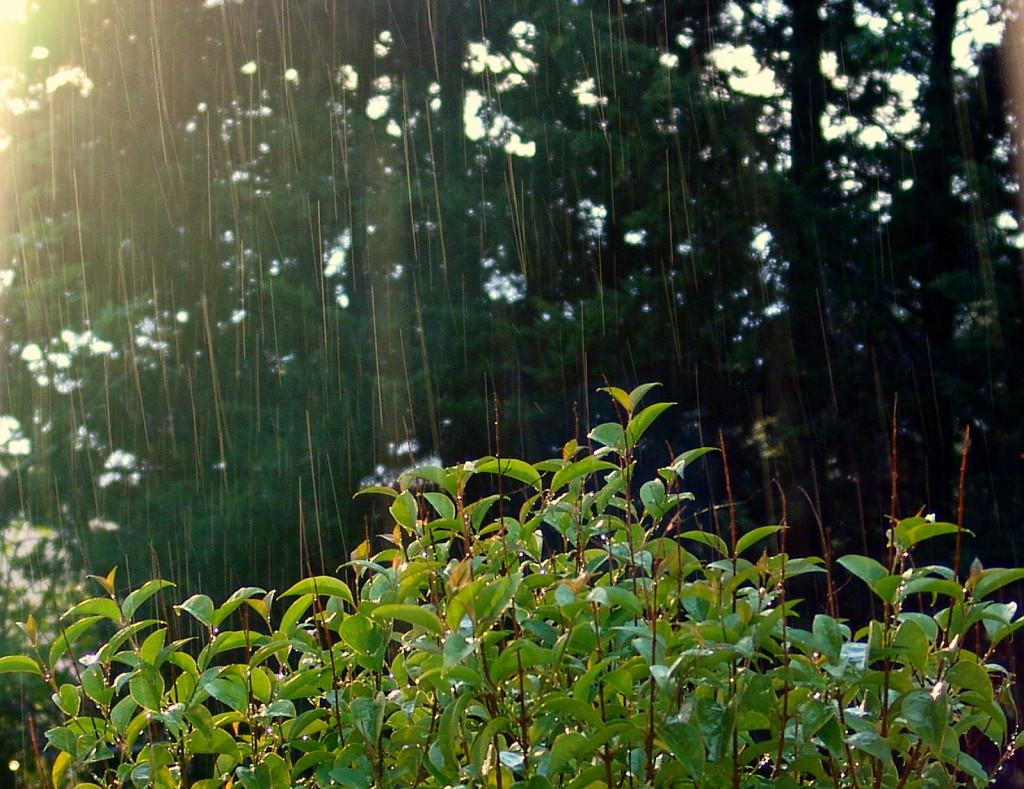Soleil pluie chaleur moustique