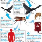 Le moustique et le virus du Nil