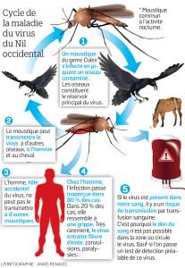 Virus Du Nil